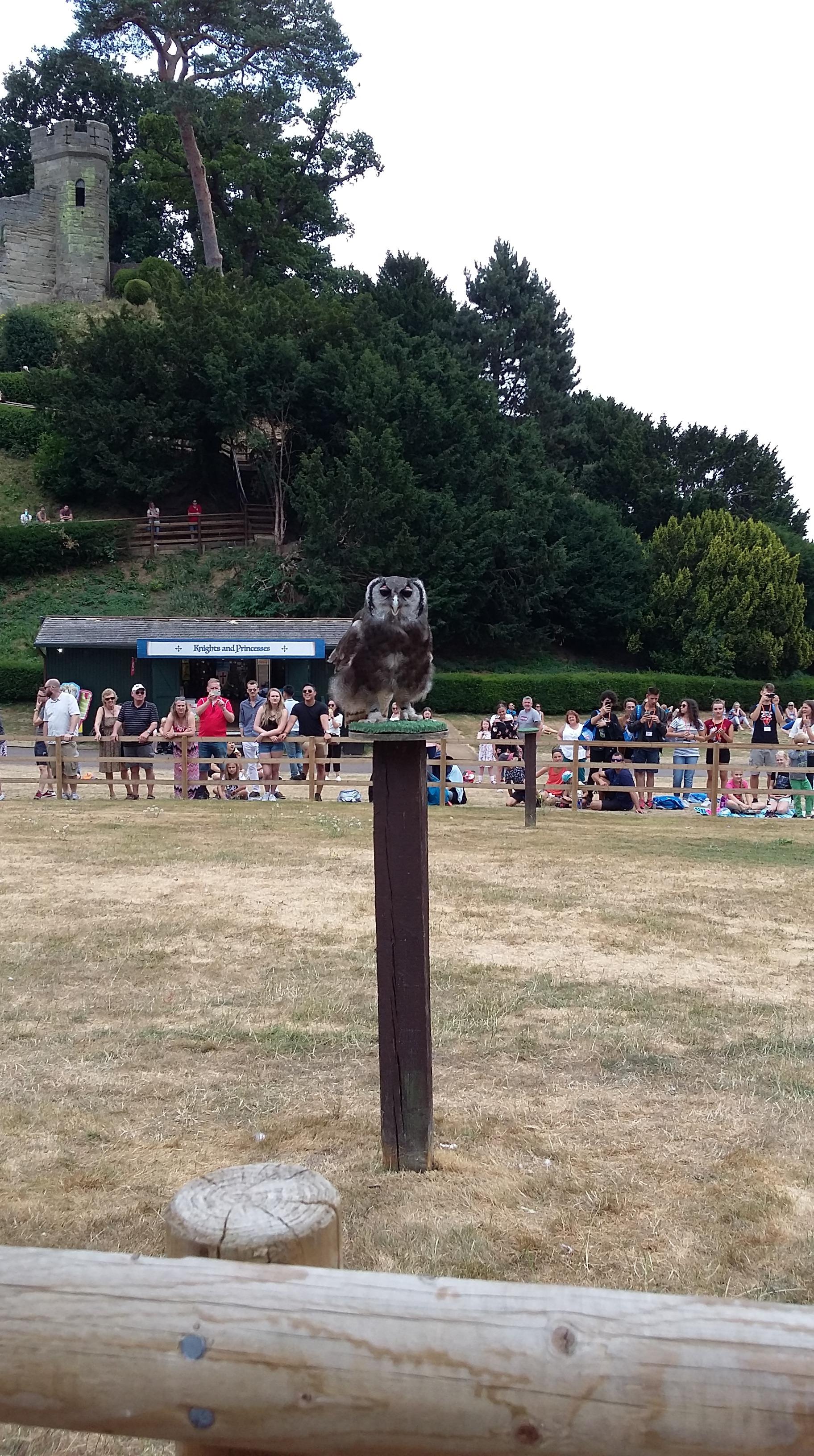 Ernie the Owl