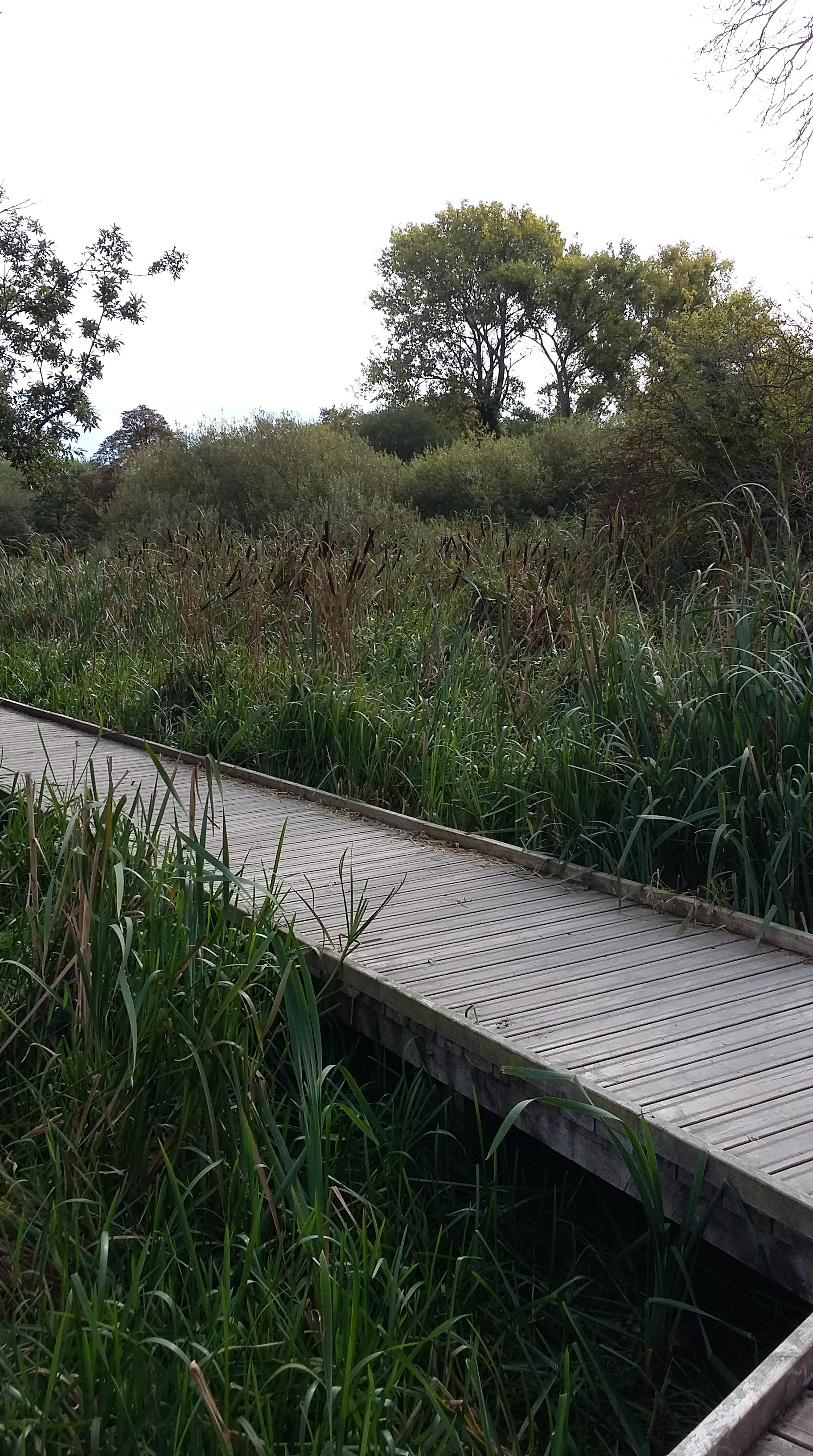The Wetlands Boardwalk