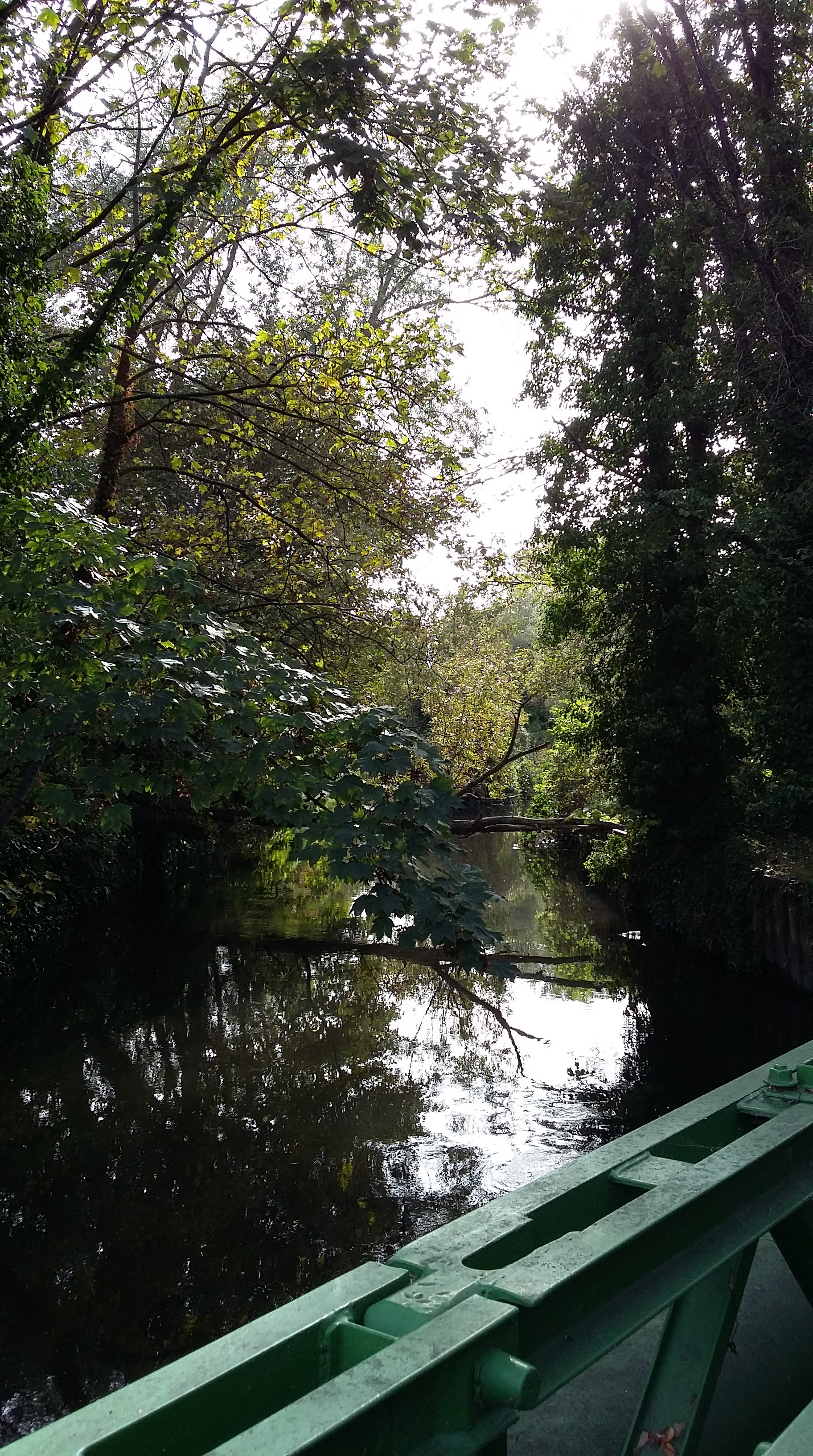 The Wandle just beyond Deen City Farm